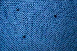 パピヨン1濃い目のブルー